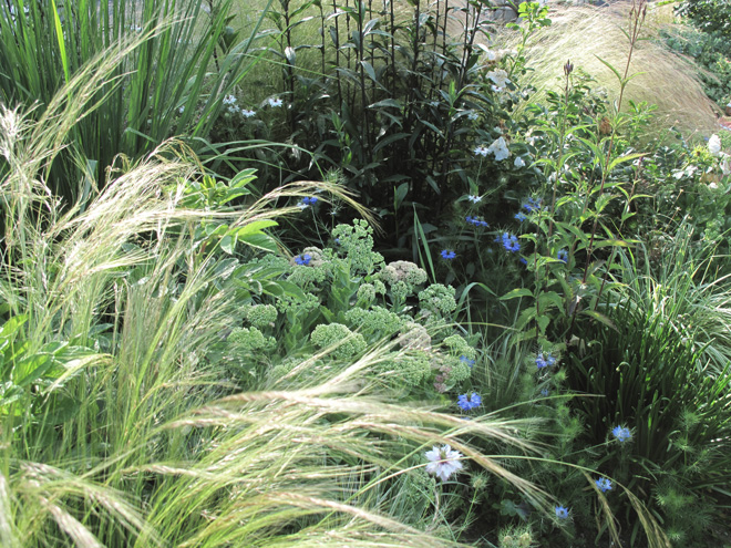 Grasses, perennials and self-seeding annuals create animate the space with movement and pollinators. Photo: Lorene Edwards Forkner