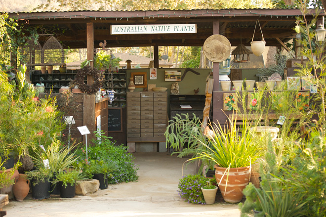 The retail nursery is open by appointment and carries the country's largest selection of Australian plants.  Photo: courtesy of Australian Native Plants Nursery