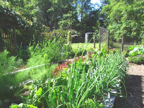 Rich soil bolstered with compost and organic amendments allows beds to be intensively planted with a healthy mix of crops while raised beds provide easy access for tending and harvest.  Photo: Elizabeth Petersen