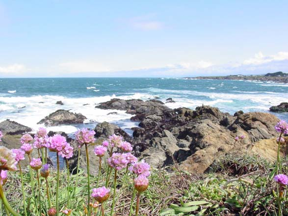The productive vegetable garden at Mendocino Coast Botanical Gardens is set back from the shoreline and sheltered from wind and salt.  Photo: courtesy of Mendocino Coast Botanical Gardens