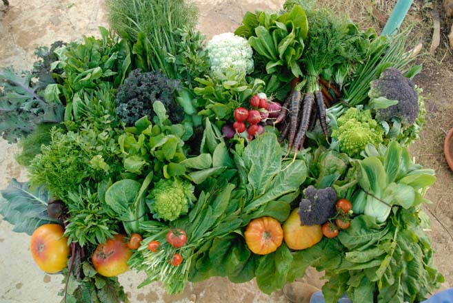 A spring harvest of Japanese greens, raddichio, giant purple and Romanesco broccoli, cauliflower, colored carrots, giant orange tomatoes, fennel, radish, kale, and onions.  Photo: Kate and Benjamin Frey
