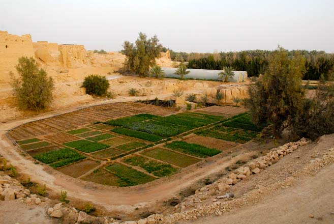 This overview of the farm before renovation shows greenhouses in the middle area as well as the lower quarry site with blocks of weedy beds surrounded by an irrigation canal.  