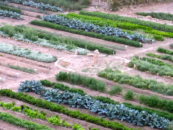 The renovated and productive quarry garden filled with orderly rows of vegetables.  Photo: Kate and Benjamin Frey