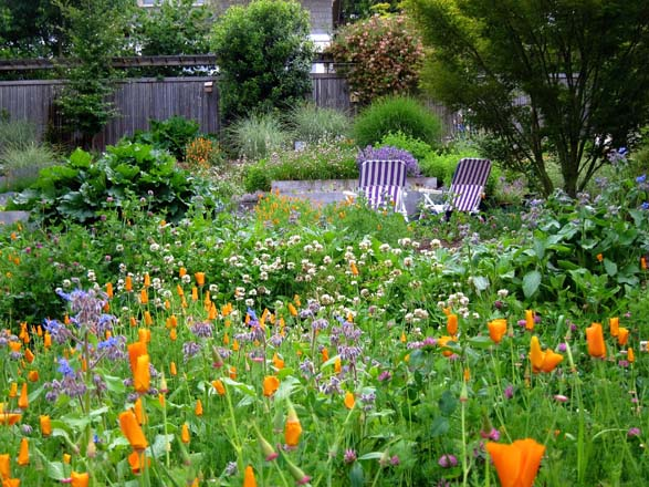 California poppies, borage, clover, chives, and other flowering plants provide a bountiful feast of pollen and nectar in the author's garden. Photo: Tracey Byrne