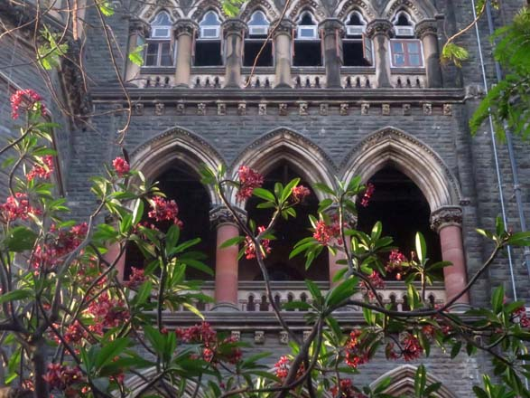 Frangipani (Plumeria rubra) soars in front of the Bombay High Court built in the Victorian Gothic style. Photo: Sairus Patel