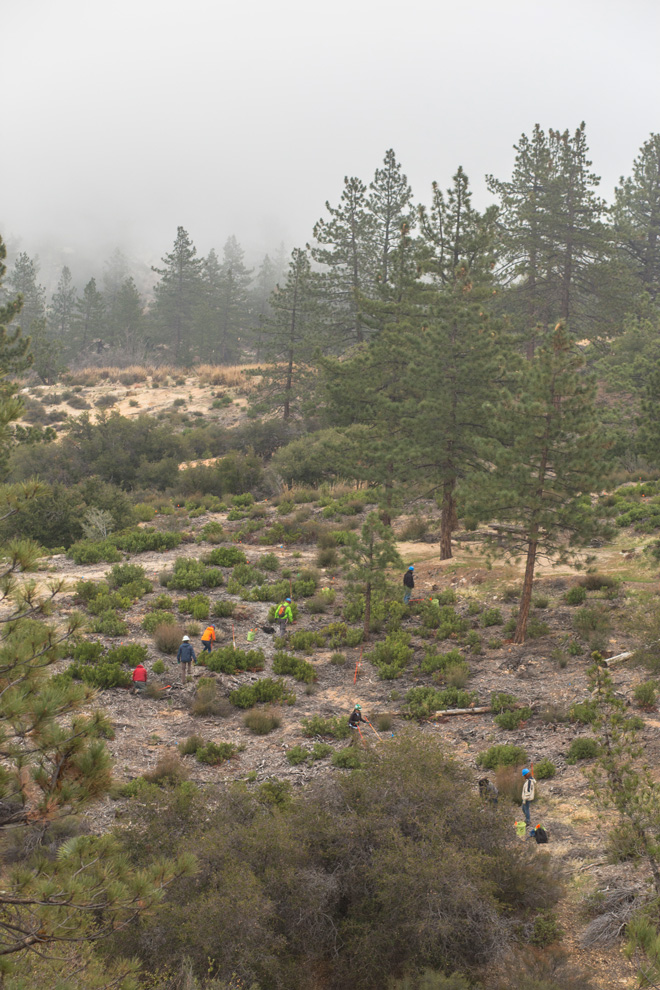 A restoration and planting project in the Angeles National Forest works to revitalize an area devastated by the 2009 Station Fire. Photo: James Kellogg/TreePeople