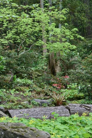 An example of the rich diversity that's possible in a shady woodland planting.  Photo: Richie Steffen.