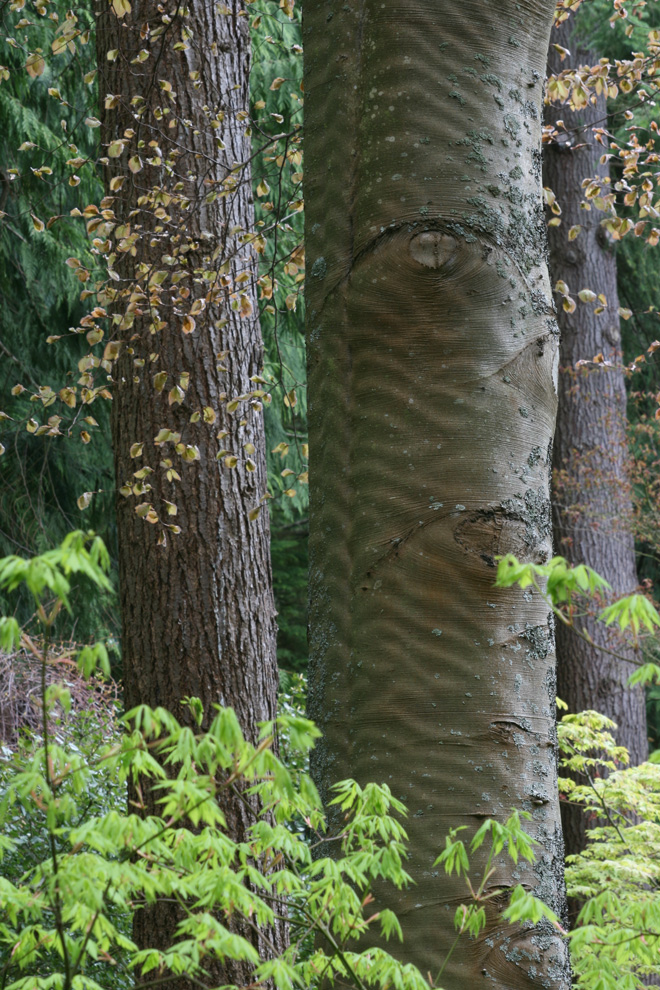 The striking upright form of various tree trunks provides a strong visual rhythm in this understory planting. Photo: Richie Steffen