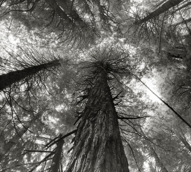 Kings Canyon Sequoias. Beth Moon, Sierra Nevada, California USA 2004