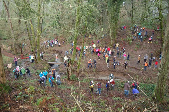 A Martin Luther King Day of Service in January 2015 drew Tree for All volunteers to Ibach Park in Tualatin, Oregon. Photo: courtesy of Clean Water Services