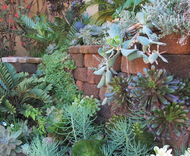 The Bishop-Borden garden is a dense tapestry of succulent color and texture.