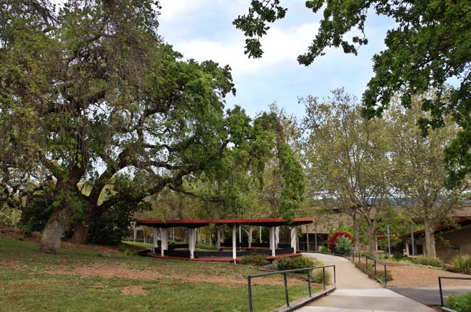 Valley oak (Quercus lobata) shelters a gazebo across from the Gavilan College student center fronted by London plane trees (Platanus ×hispanica). Photo: Jane Edberg