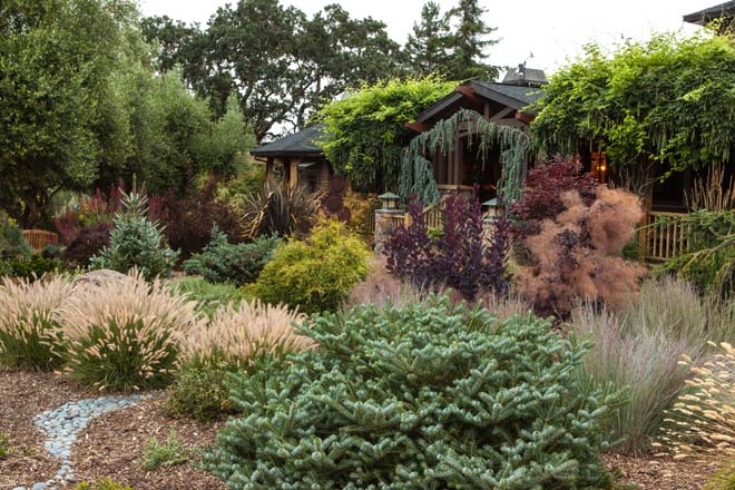 Mixed plantings in Sara Malone's Petaluma garden furnish seasonal interest throughout the year.  Photo: Janice LeCocq