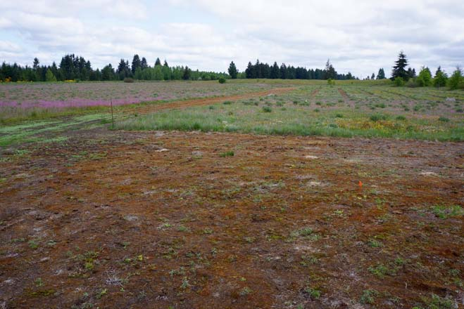 Flowering annuals were the most impacted by fire suppression. Here in a burned zone at the Glacial Heritage Preserve native annuals are thriving after being reseeded.  Photo: Daniel Mount