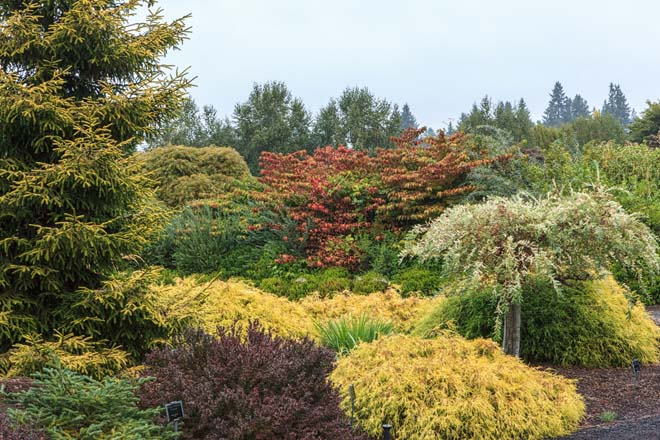 A variety of color and texture in the conifer garden at The Oregon Garden in Silverton.  Photo: Janice LeCocq
