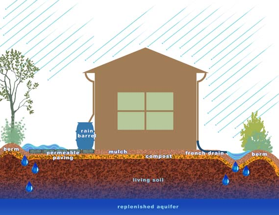 After remediation: a residential property designed to support watershed concerns.  Illustration: Alex Stevens