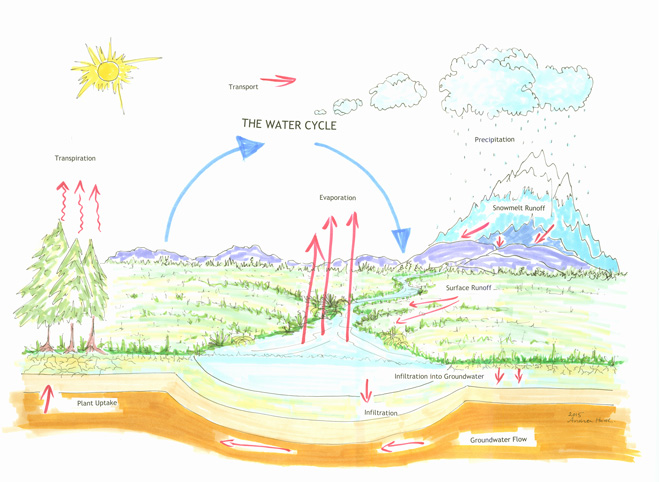 Earth's water cycle. Illustration by Andrea Hurd