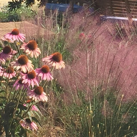 Beautiful planting compositions draw employees to the roof in fine weather. Photo: Carol Moholt