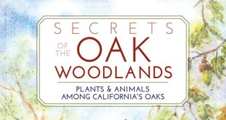 oak-book-feature