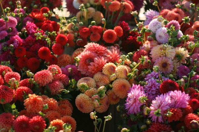 Dahlias are queen of the summer cutting garden. Photo: Chris Benzakein