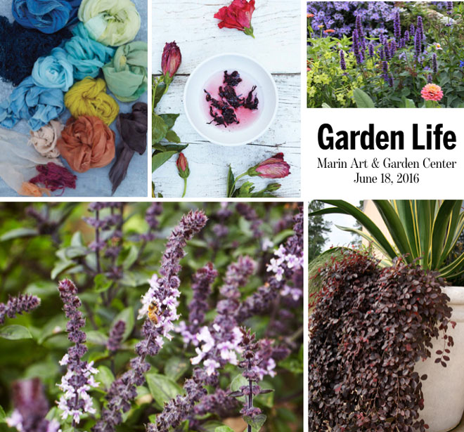 Photos: courtesy of (clockwise from lower left) Homestead Design Collective, Natural Color by Sasha Duerr, copyright 2016 Watson-Guptill, Annie's Annuals, Sunset Western Garden Collection.