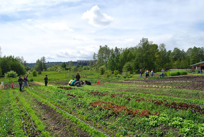 The UW Farm on the University of Washington campus. Photo: Riz Reyes