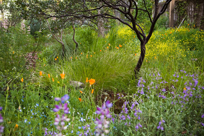 A California native plant meadow in spring in the garden of Phil Van Soelen.  Photo: Saxon Holt/PhotoBotanic.com