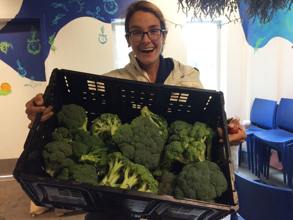 Farm manager Sarah Geurkink, bringing in the broccoli at Mercer Court.  Photo: Cyrena Thibodeau