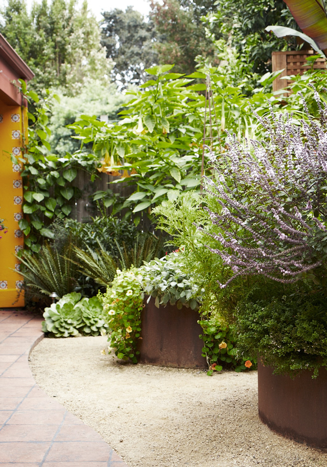 Homestead Design Collective believes gardens should be beautiful and productive. Photo: Homestead Design Collective, David Fenton