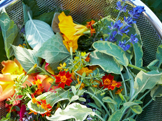Harvesting herbs and edible flowers. Photo: Homestead Design Collective, David Fenton