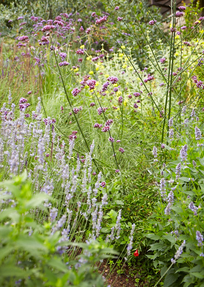 Planting for pollinators is a thoughtful consideration in every Homestead project. Photo: Homestead Design Collective, David Fenton