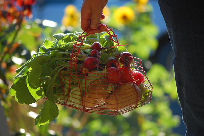 A delicious harvest from a Georgetown garden.  Photo: Dan Corum
