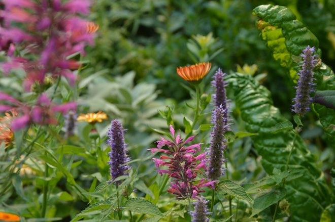 Imagine a medley of tasty herbs and beautiful blooms. Photo: James Forkner