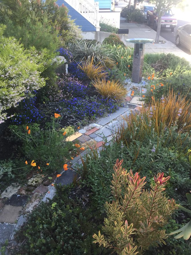 A colorful walkway is surrounded by a planted tapestry of color and textures. Photo: Organic Mechanics