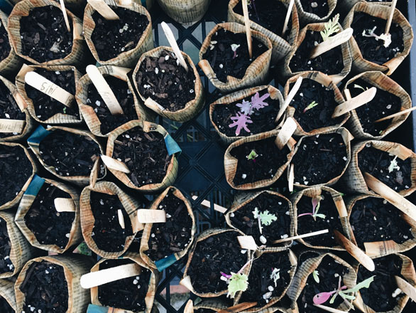 Seedlings await planting in handmade newspaper seed pots. Photo: Ethan Bodnar