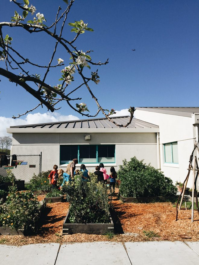 Garden plots and young gardeners at Bay Farm School. Photo: Ethan Bodnar