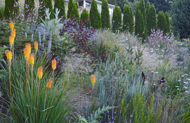 A lively naturalistic mix of perennials, grasses, and woody plants populates a dry hillside in the Harborton Hill garden. Photo: Bob Hyland