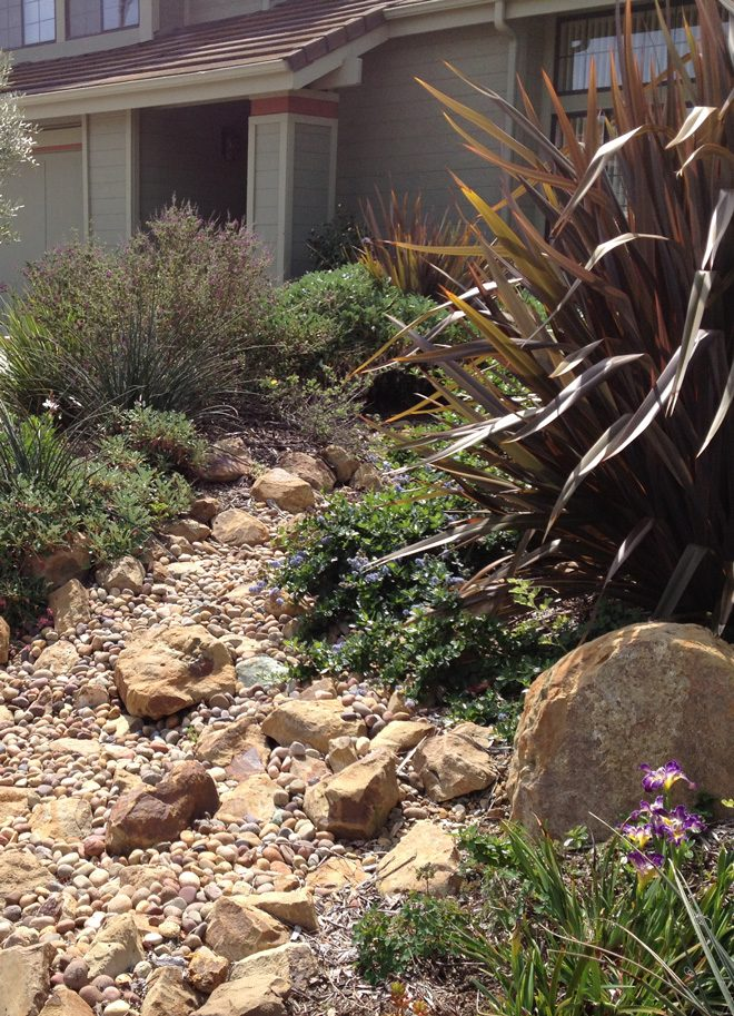 Installing a rain garden or sculpting dry creek beds and swales allows the landscape to accept stormwater during the rainy season without any need for a capture device. Photo: Marilee Kuhlmann