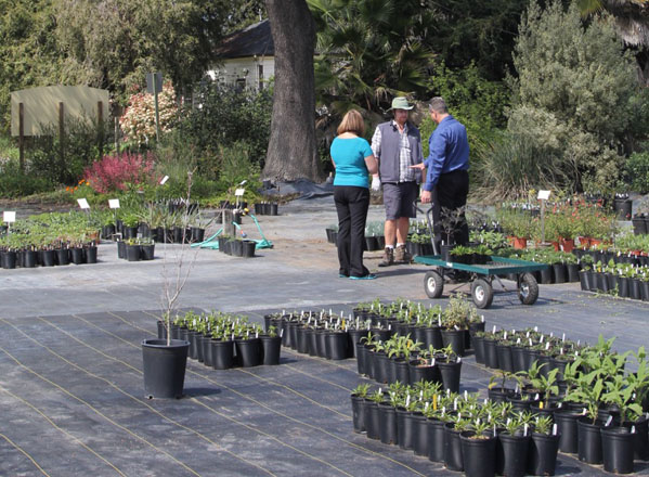 In addition to producing well-grown plants, the knowledgeable and experienced staff at California Flora is always available to answer questions and assist gardeners.  Photo: Jennifer Jewell