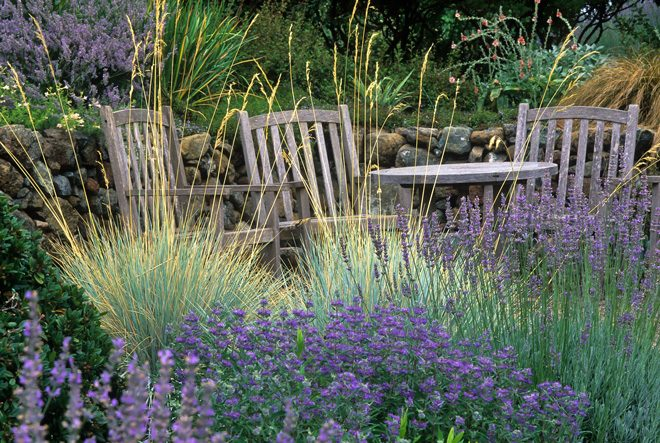 An inviting vignette in the water-wise garden of Mary and Lew Reid. Photo: Saxon Holt/PhotoBotanic.com