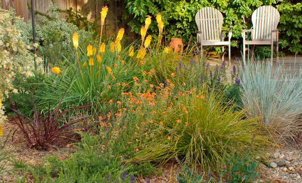 Perennials, grasses, and woody plants mile with wild abandon in this Concord garden. Photo: Jude Parkinson-Morgan