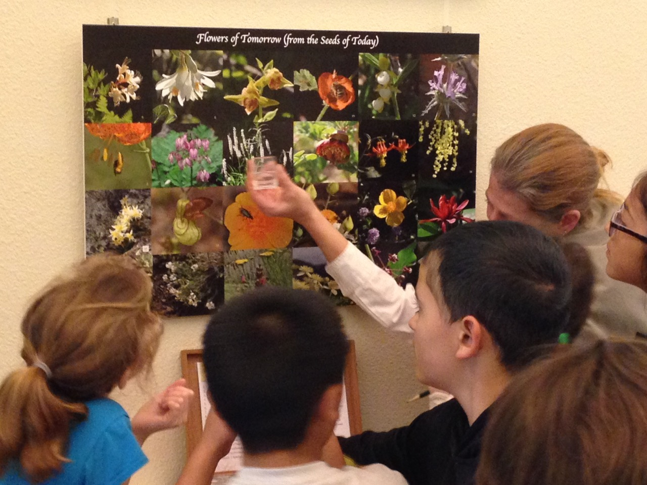 Students at Gateway Science Museum matching seed specimens to flower photos. Photo: Jennifer Jewell
