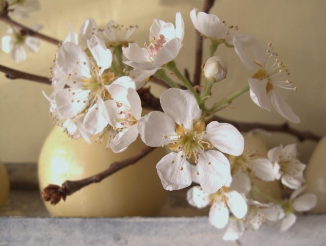 Follow simple steps to encourage winter branches to reward you with a precocious spring. Photo: Lorene Edwards Forkner