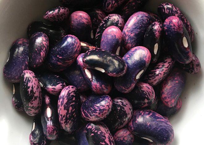 Scarlet runner beans. Photo: Lorene Edwards Forkner