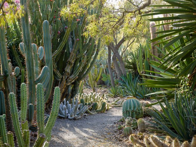 The Ruth Bancroft Garden. Photo: Marion Brenner