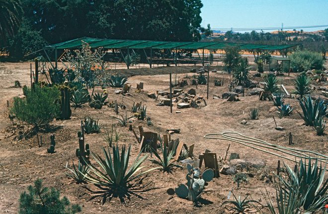 Ruth's young garden in 1973. Photo: courtesy of the Ruth Bancroft Garden