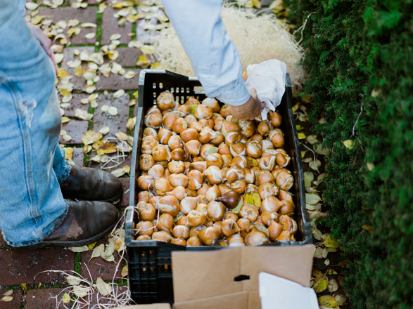 Carefully planned and plotted seasonal bulb displays are plotted and planted each year. Photo: Ryan Tuttle