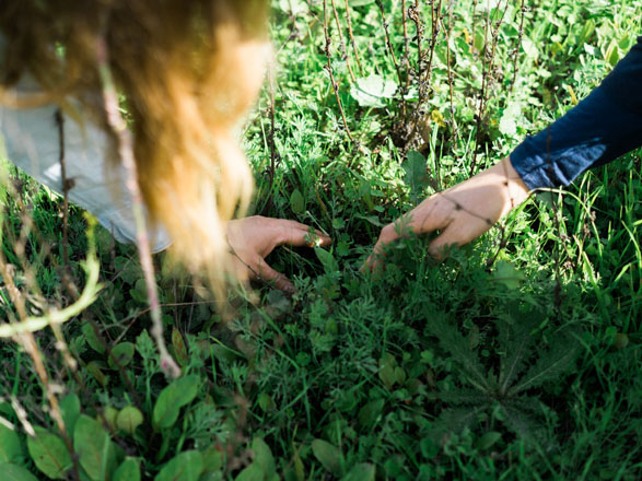 Hallie and Clare examine the rich matrix of plants in the North Meadow, searching for emerging Lupinus succulentus and Nemophila menziesii seedlings. Photo: Ryan Tuttle