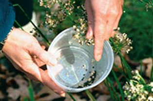 hort-seed-collecting