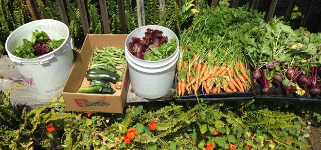 A delicious, healthful, organic harvest to inspire Bay Area gardeners. Photo: Ronald Castagnetti
